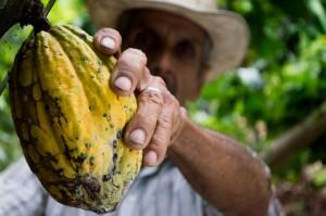 man hand fruit cocoa 50707